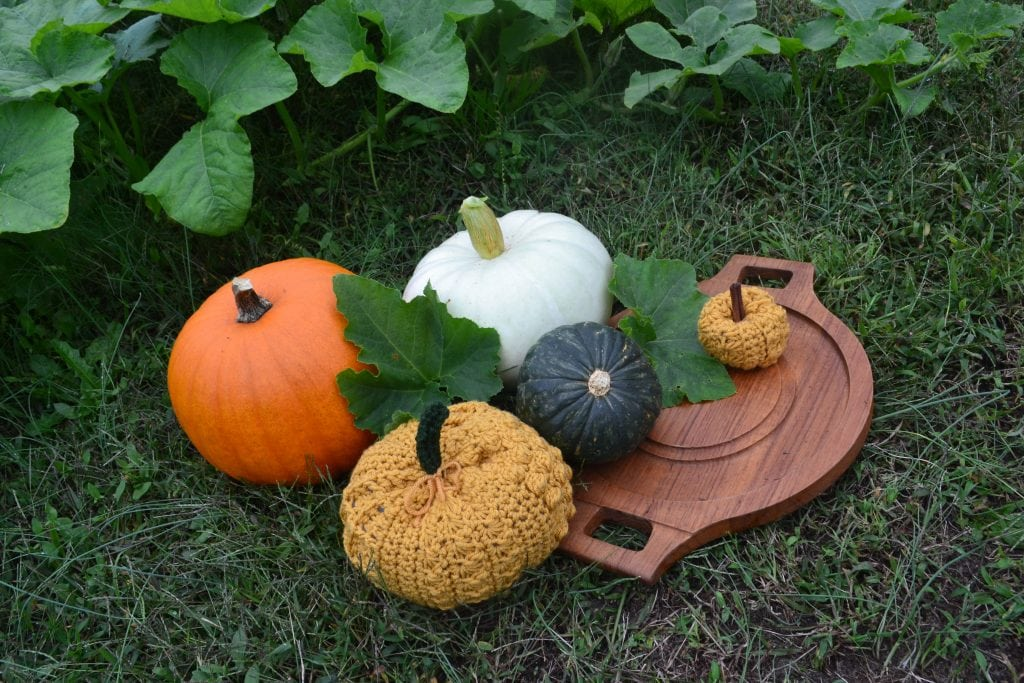 photo of a few crochet pumpkins sitting with real pumpkins outside